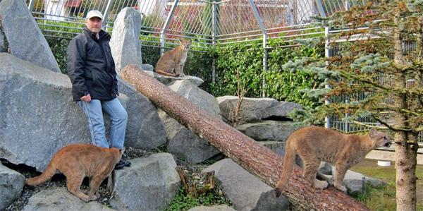 cougar mountain zoo, animals, cougar, tiger